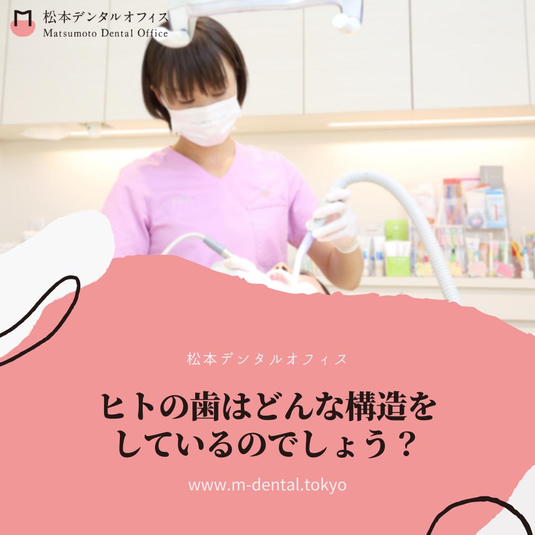 ヒトの歯はどんな構造をしているのでしょう?